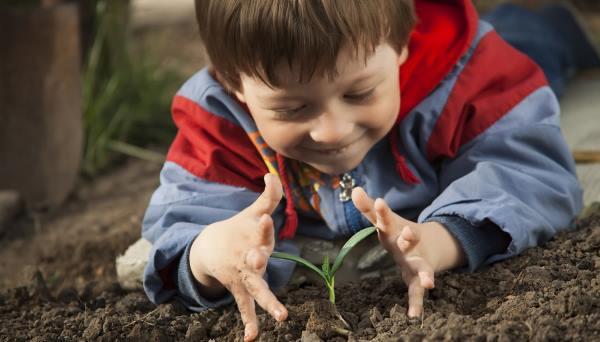 cultivar alimentos