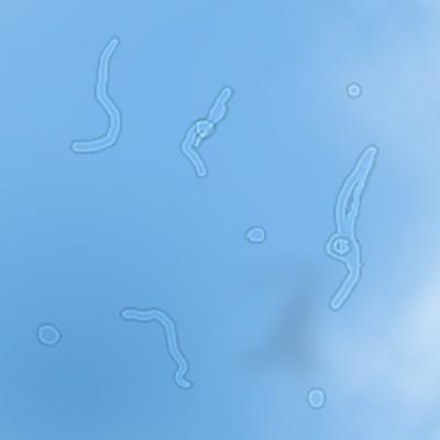 moscas volantes brancas