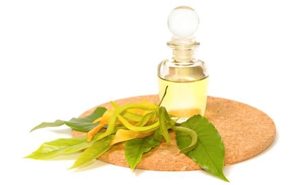 óleo essencial ilangue ilangue