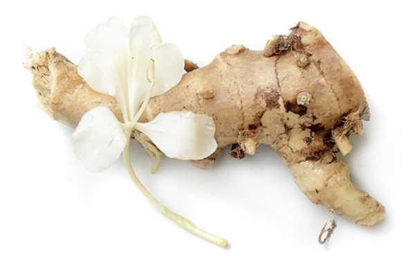rizoma flor lírio do brejo