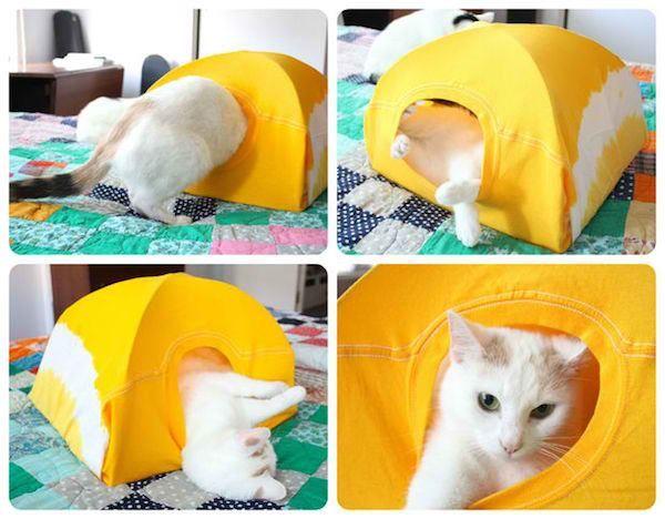 barraca de gato