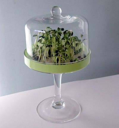 pote de vidro germinar