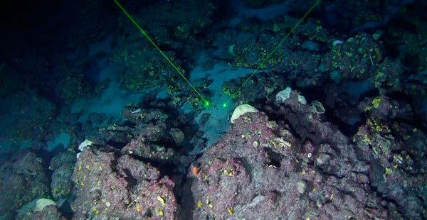 coral amazonia 1