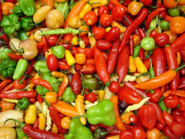 pimenta latinas