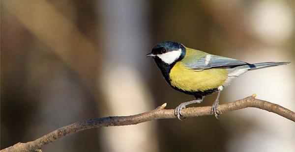 birdwaching