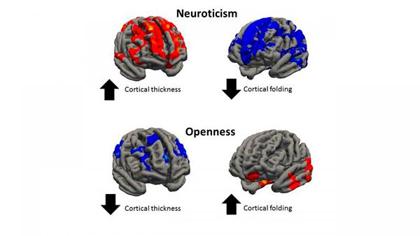 cerebro personalidade