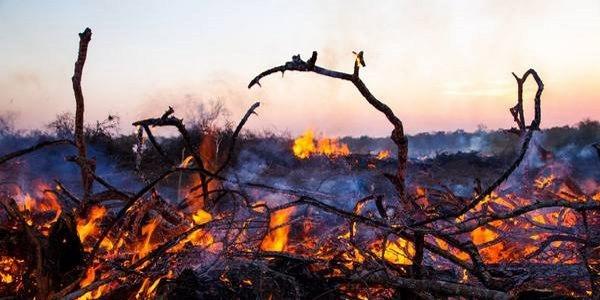 deforestaçao brasil