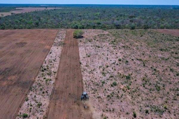 deforestaçao 2