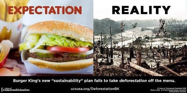 deforestaçao burger king