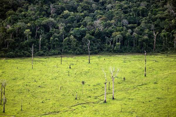 desmatamento amazonia 2
