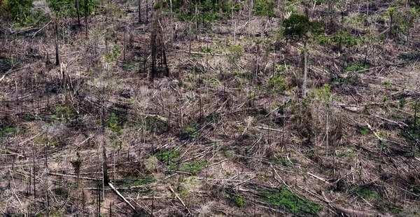 desmatamento amazonia 3