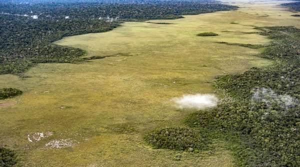 desmatamento amazonia 5