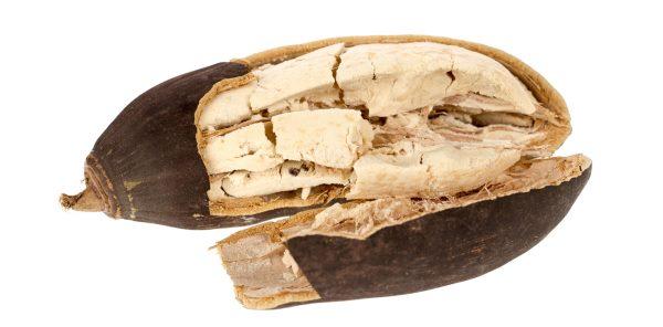 fruto do baoba