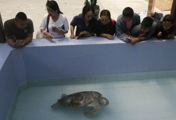 tartaruga cofre 2