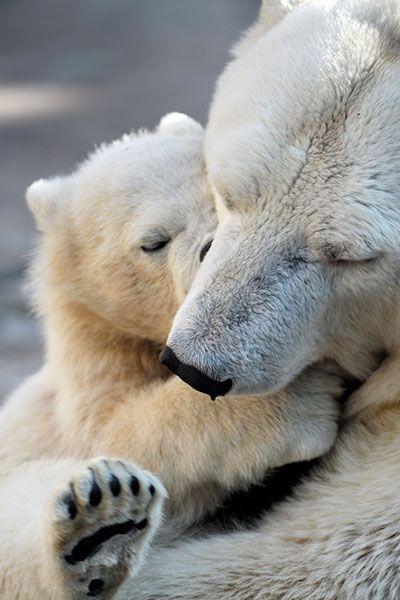 uros polar filhote