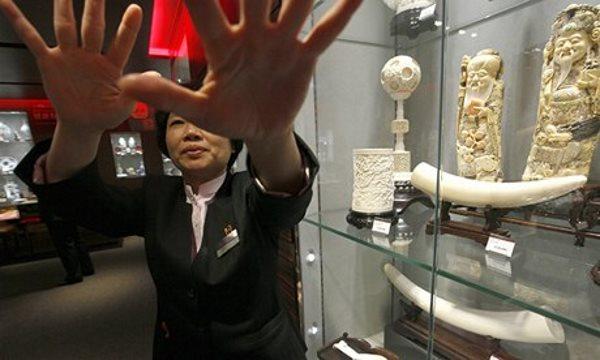 china lojas marfim