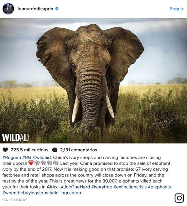 elefantes china di caprio