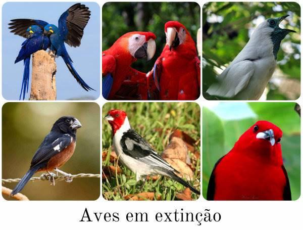 avistar brasil 2