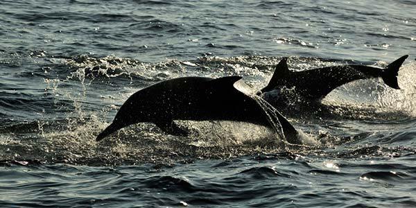 golfinho 4