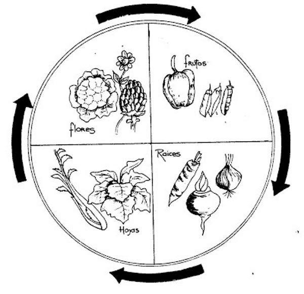 rotaçao cultivos horta 5