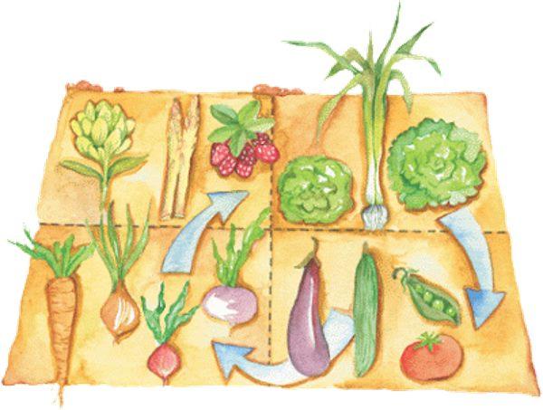 rotaçao cultivos horta