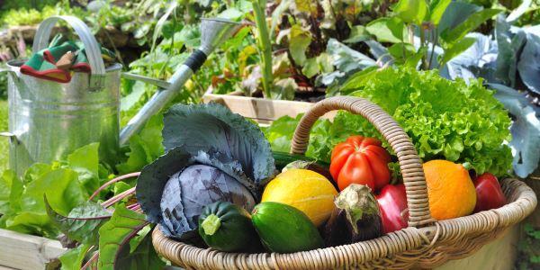 rotaçao cultivos em uma horta
