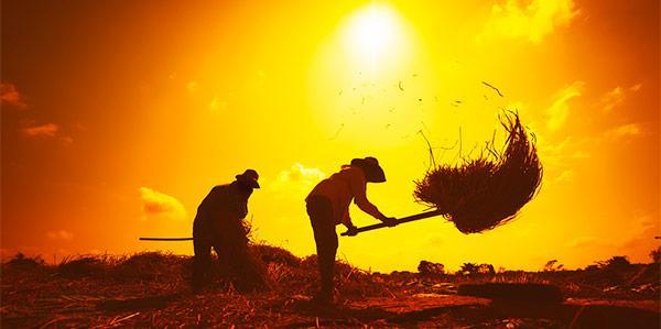 trabalhador-rural