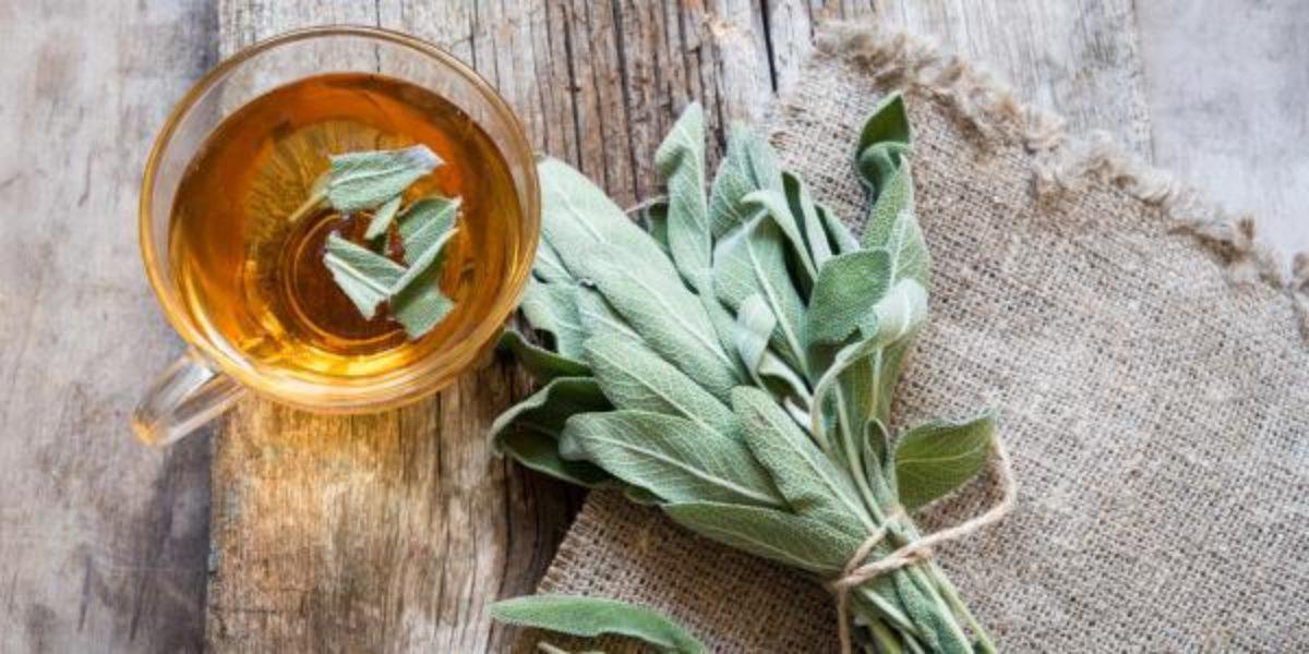 Chá de Sálvia → os Benefícios para tua Saúde, Contraindicações e ...