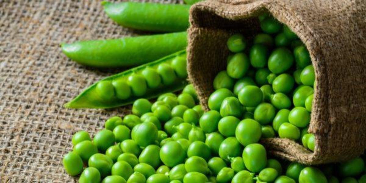 ERVILHA: 12 Benefícios e Propriedades de Emagrecimento - GreenMe ...