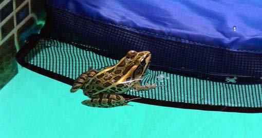 frog log 2