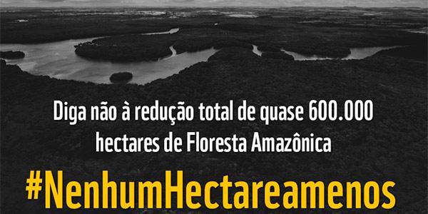 MPs do desmatamento