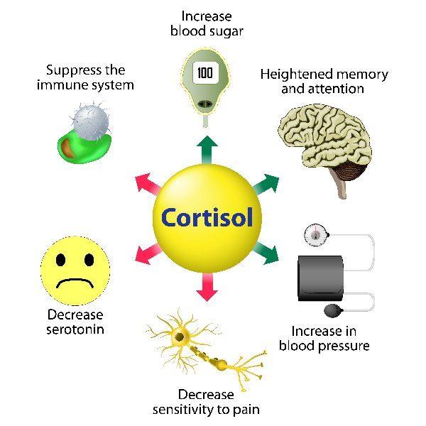 sintomas cortisol