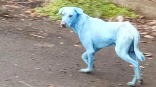 cachorro azul 2