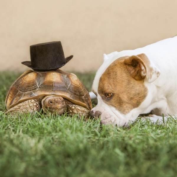 amizade cachorro tartaruga