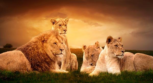 familia leo