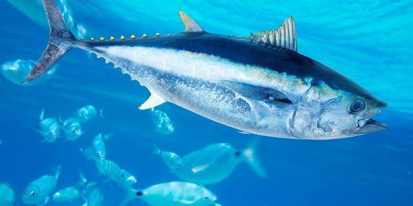 peixe-mudança-climatica