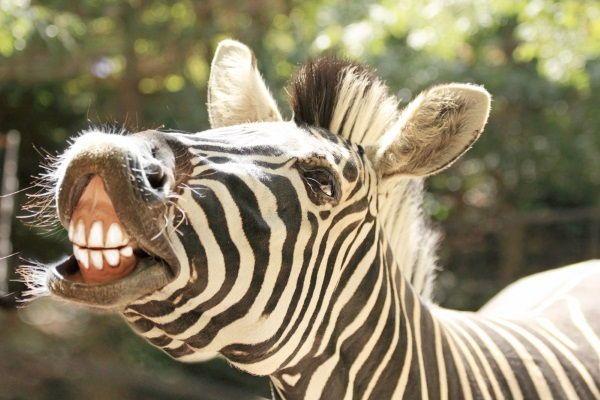 animais herbivoros 1