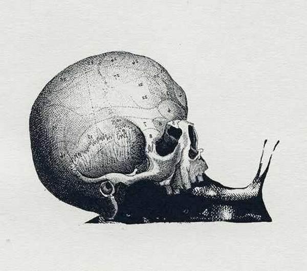 crânio caracol teste 2