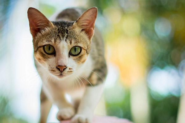 gato maestria 2