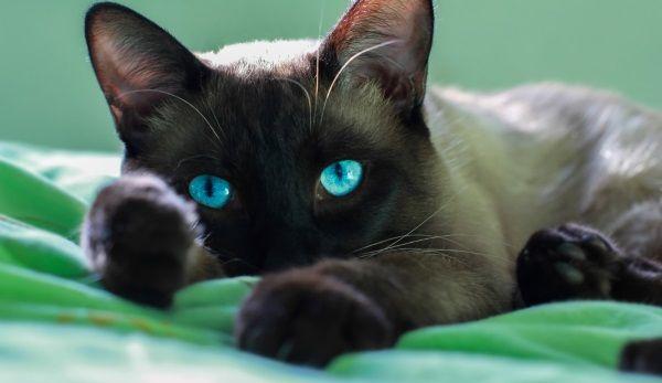 gatos afofam ou amassam pão 2