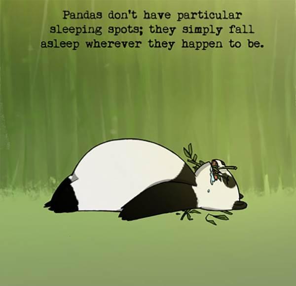 panda curiosidade