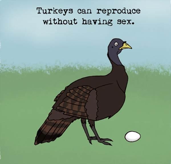 turquia curiosidade