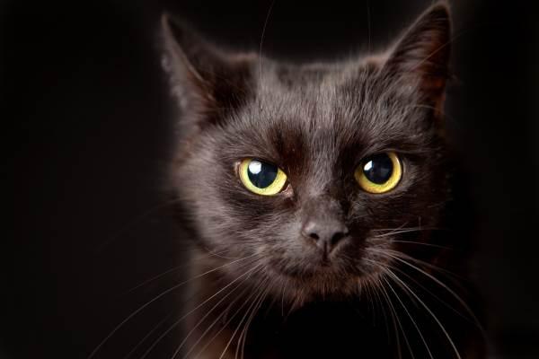 gato preto 10