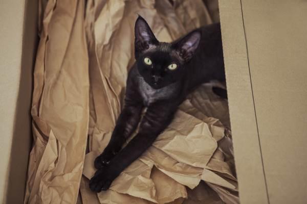 gato preto 5