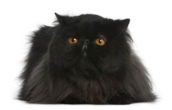 gato preto 6