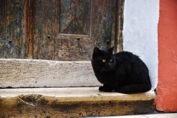 gato preto 7