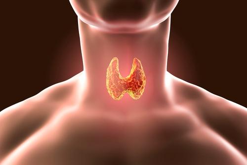 tireoide glandula