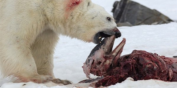 polarbearday 2