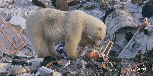 polarbearday 4