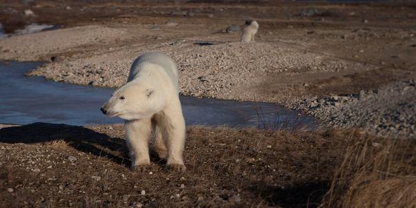 polarbearday 5